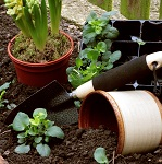 Scene of plants, pots and gardening tools