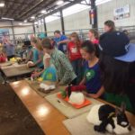 4-H members showing their companion rabbits at fair