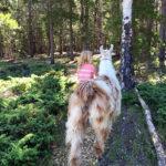 4-H member leading her llama