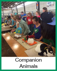 4-H Companion Animal Projects