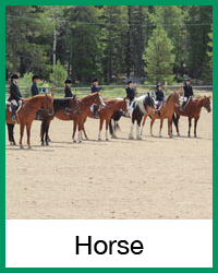 horse-final