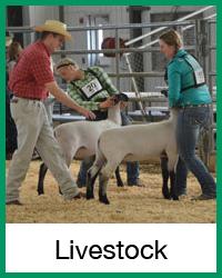 livestock-final