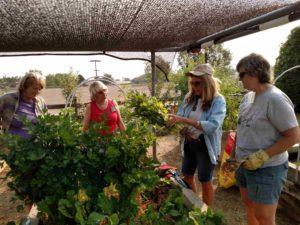 Master Gardeners in Garden