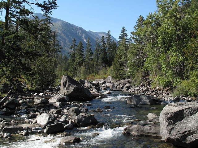 A mountain stream with riverrocks and trees on the banks