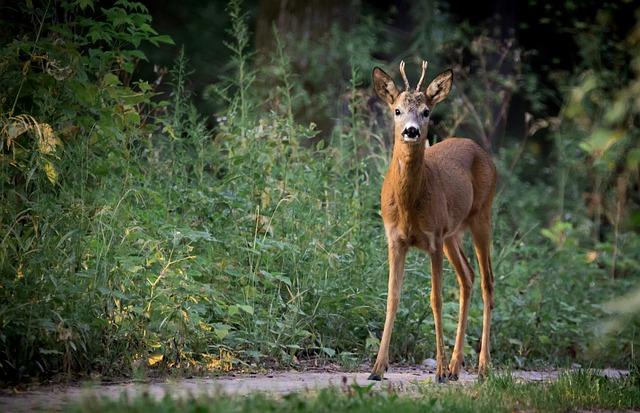 Deer in a natural habitat